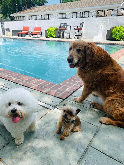 LFF_blog_june2019_dogs01