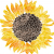 LFF_september2019_sunflowers-at-the-mansion