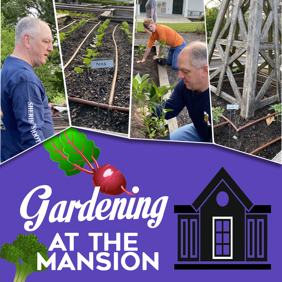 Gardening at the Governor's Mansion