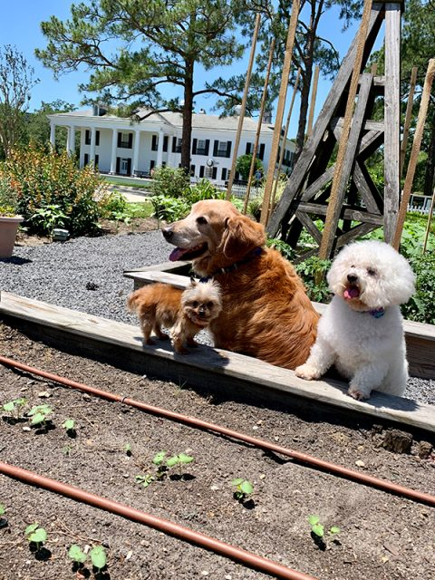 LFF_Blog_July2020_Dogs