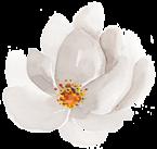 flower-white-single