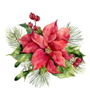 december-layout-flower-poinsettia