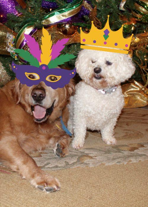 LFF_Blog_Feb2021_Dogs