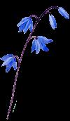 march2021-flower