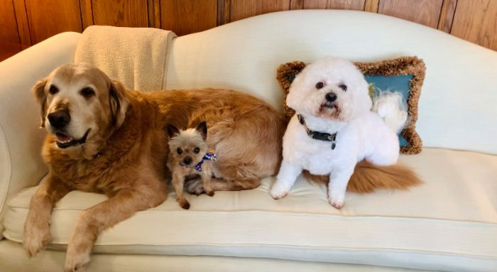 LFF_Blog_April2021_Dogs