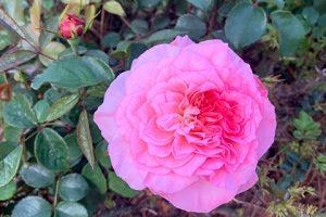 LFF_Blog_April2021_Mansion_GardenPhotos02