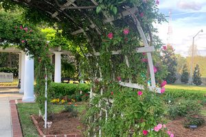 LFF_Blog_April2021_Mansion_GardenPhotos05