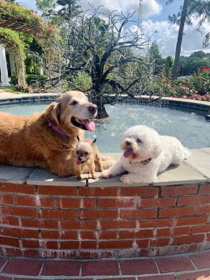 LFF_Blog_June2021_Dogs