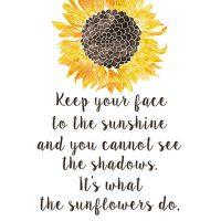 LFF_blog_sep2019_sunflowers06