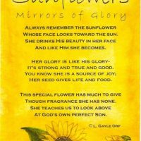 LFF_blog_sep2019_sunflowers07