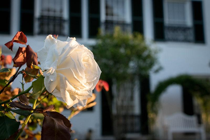 LFF_blog_September2020_Garden03